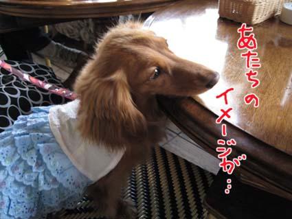 blog 09071906