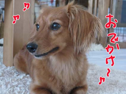 blog 09080301