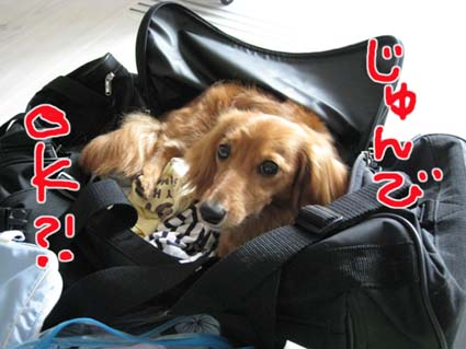 blog 09080605