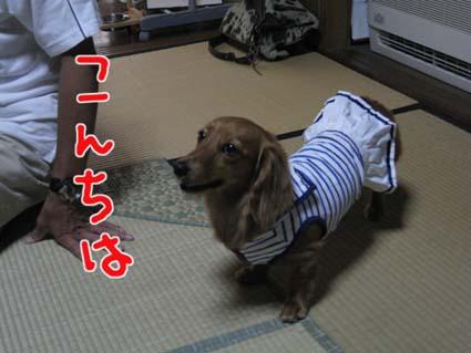 blog 09082008