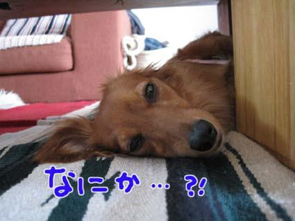 blog 09082105
