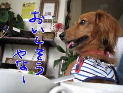 blog 09082704