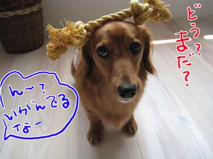 blog 09082803