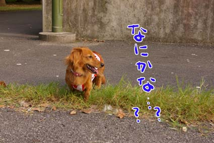 blog 09083103