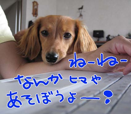 BLOG091306.jpg