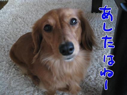 BLOG110101.jpg
