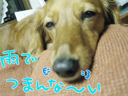 BLOG110804.jpg