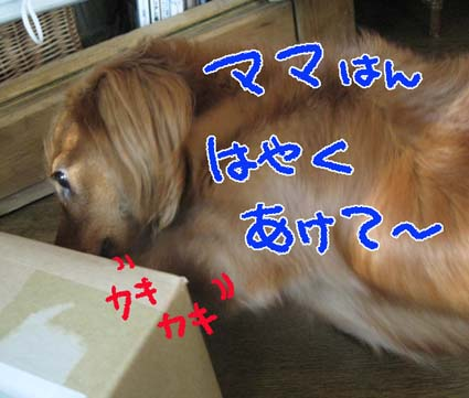 BLOG111007.jpg