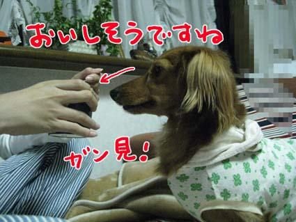 BLOG111304.jpg