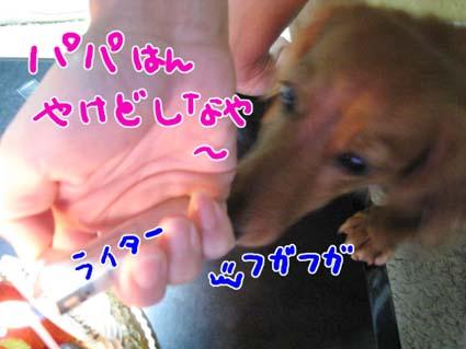 BLOG111706.jpg
