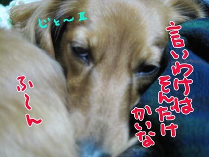 BLOG112008.jpg
