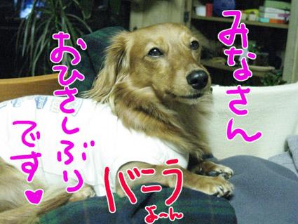BLOG121201.jpg