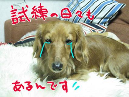 BLOG121603.jpg
