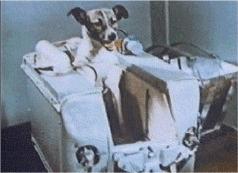 宇宙を飛んだ犬ライカ