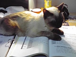 でも勉強の邪魔はしないでね。