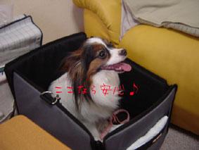 3DSC05661.jpg