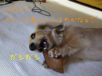 CIMG0366.jpg