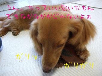 CIMG0369.jpg