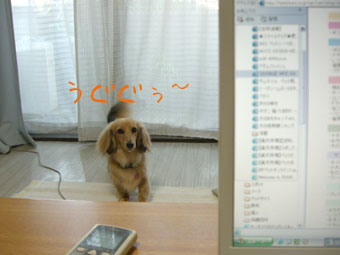 CIMG0470.jpg