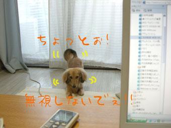 CIMG0472.jpg