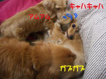 CIMG3315.jpg