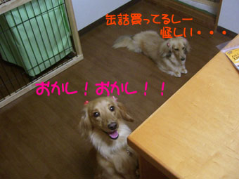 CIMG3343.jpg