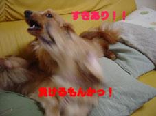 DSC05353.jpg
