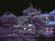 IMG_0419_edited夜景修正