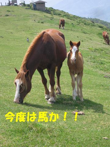 20080503_0010.jpg