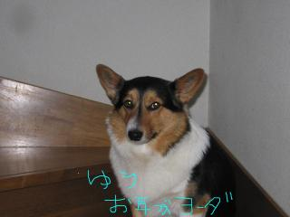 繝懊・繝峨→繧・≧+002_convert_20090331120652