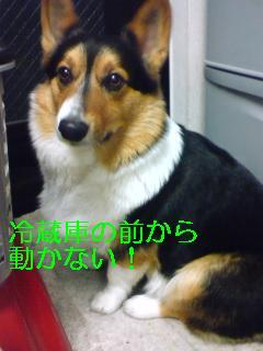 ください (1)
