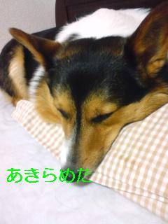 ください (3)