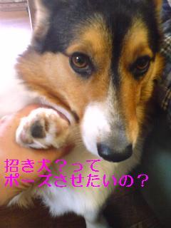 シャンプー (3)