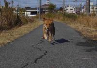 sanpo20061124-4.jpg