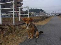 sanpo20070123-3.jpg