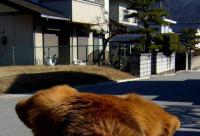 sanpo20070215-5.jpg