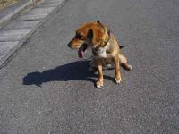 sanpo20070219-4.jpg