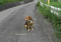 散歩20090821-2