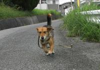 散歩20090821-3