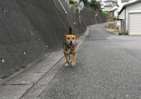 散歩20090821-4