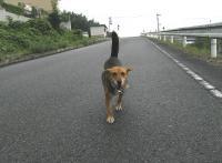 散歩20090822-2