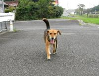 散歩20090822-3
