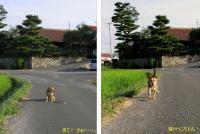 散歩20090823-3