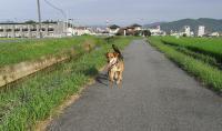 散歩20090823-4