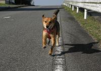 散歩20090824-2