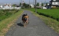 散歩20090824-4