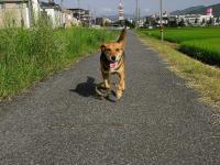 散歩20090825-5