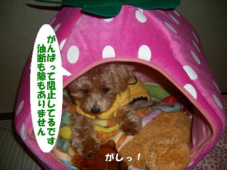 UNI_0331.jpg