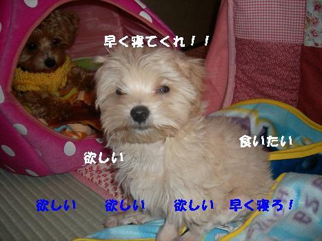 UNI_0332.jpg