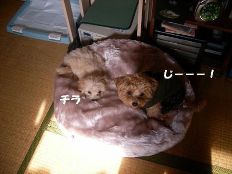 UNI_0340.jpg